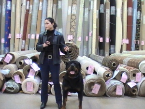 rottweiler carpet northern virginia flooring hardwood sales person
